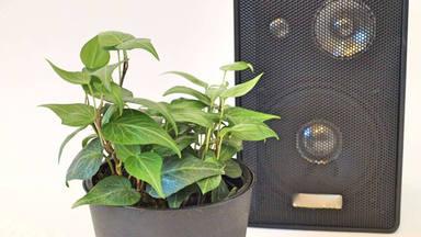 Las plantas entienden de música