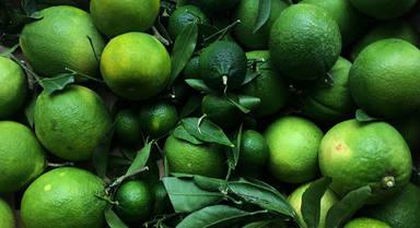 Filosofía de Bolsillo – Madurando naranjas
