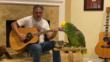 """El loro rockero vuelve a enternecer al mundo con una nueva versión de """"Stairway to Heaven"""" de Led Zeppelin"""