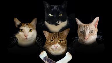 """Queen: así es la genial """"Bohemian Catsody"""", la parodia con gatos que Freddie Mercury adoraría"""