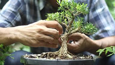 Filosofía de bolsillo – Experto en bonsáis