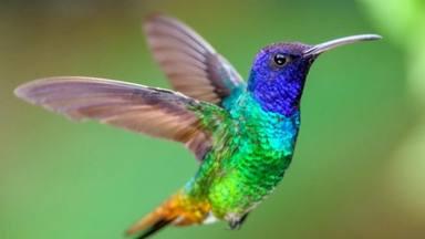 Filosofía de Bolsillo – 6000 colores diferentes