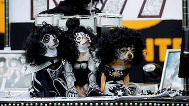 Cinco temas de Rock inspirados en perros