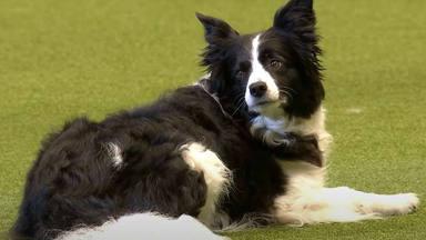"""Este perrito, que baila al ritmo de """"Bring Me To Life"""" de Evanescence, ha revolucionado Internet"""
