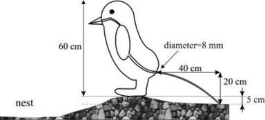 ctv-oeg-pinguino
